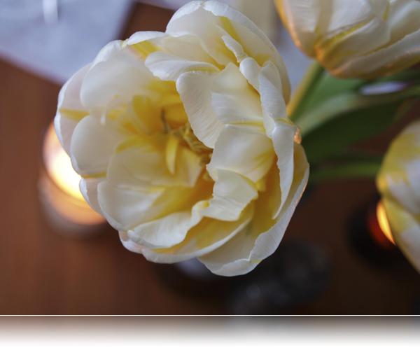 Dobbelt tulipan...