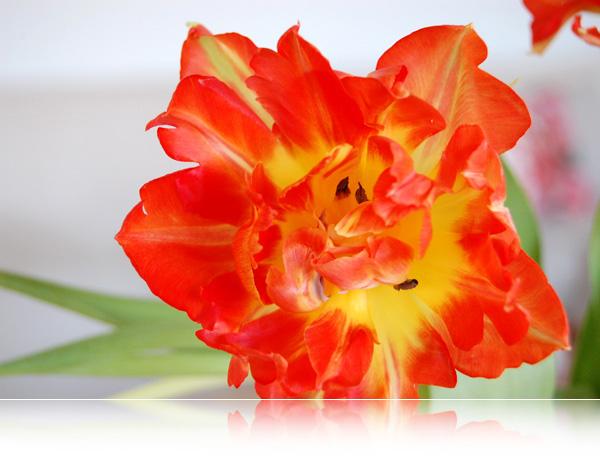 Blomster-ild...