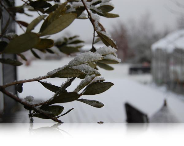 Vintervejr...