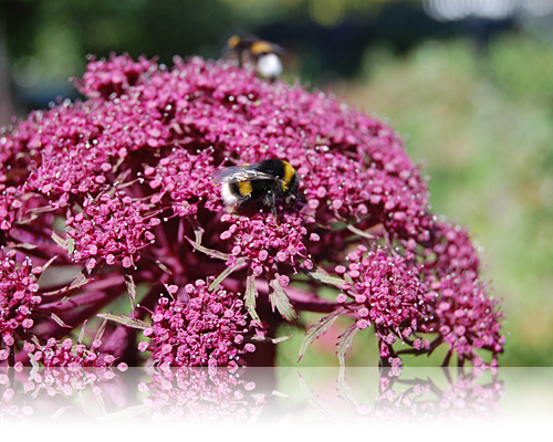 Busy bee…