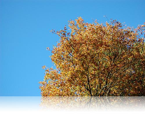 Oktober med højt til den himmelblå i Skåne…