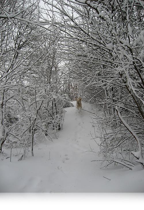Winterwonderland…