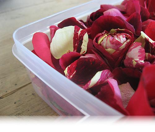 Roser til pynt…