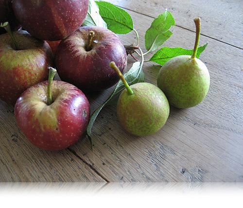 Æblerov…