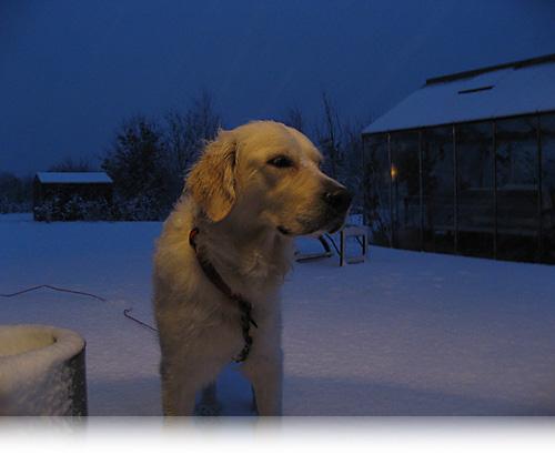 Nugga i sne…