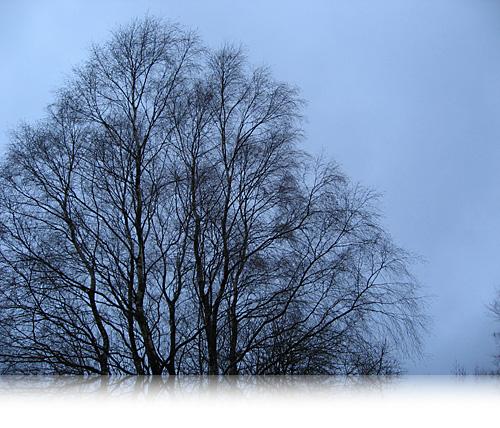 Vintergrene…
