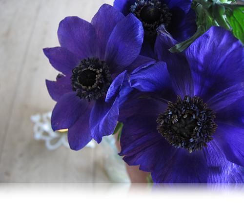 Marts med franske anemoner…